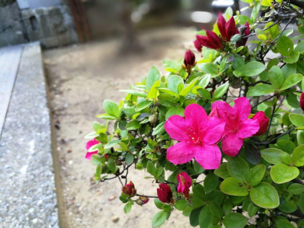 ファーウェイP10で撮った花のしゃしん