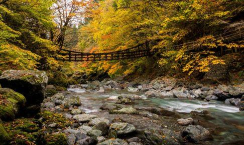 徳島の観光名所のかずら橋